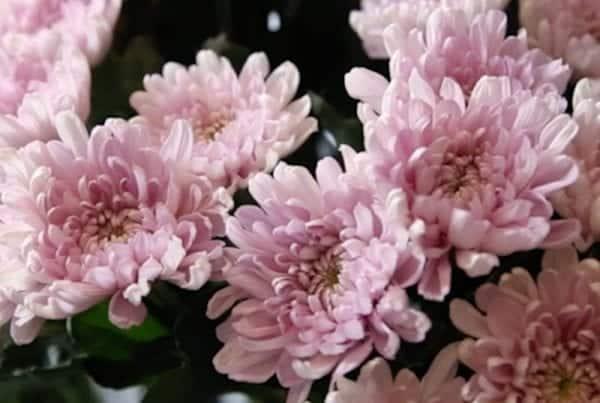 Stock Florist Video